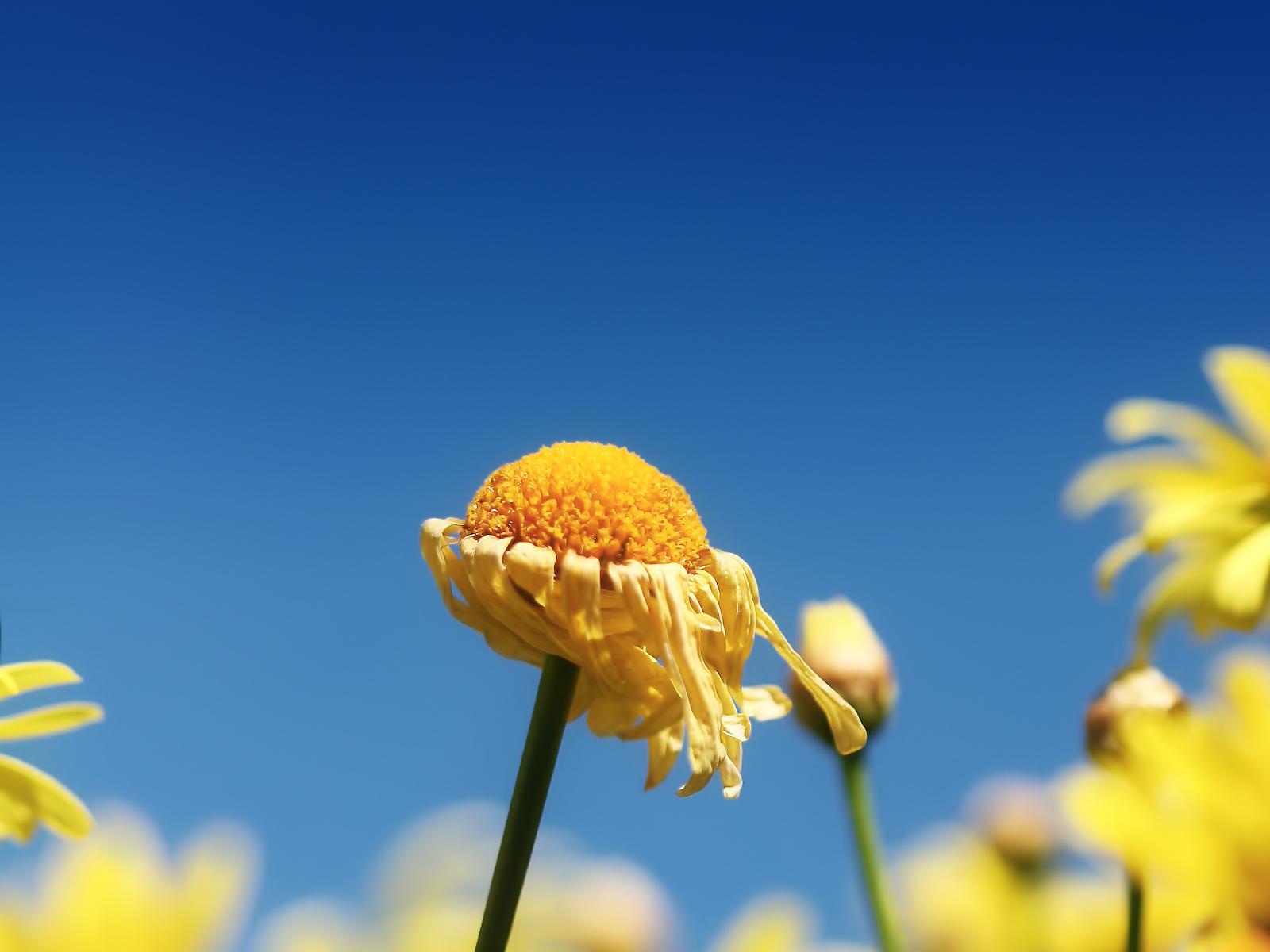 http://4.bp.blogspot.com/-UWCf-NIIseg/TxWWSdAT3JI/AAAAAAAAE80/Y25XgZ6IrnU/s1600/Nature+Wallpaper+0008.jpg