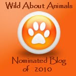 Nominated Blog 2010