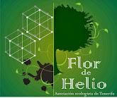 FLOR DE HELIO