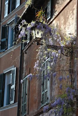 wisteria glicine vicolo del piede trastevere roma rome