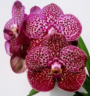 Imagens de Orquídeas