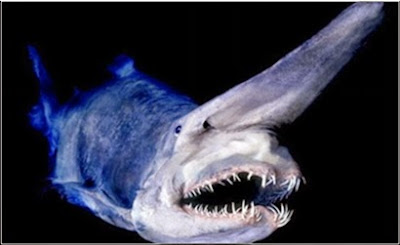 Lima Ikan Berwajah Menyeramkan di Dunia