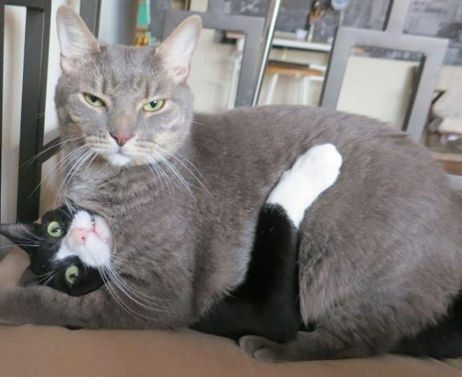 Cats Move Along This Doesn T Concern You