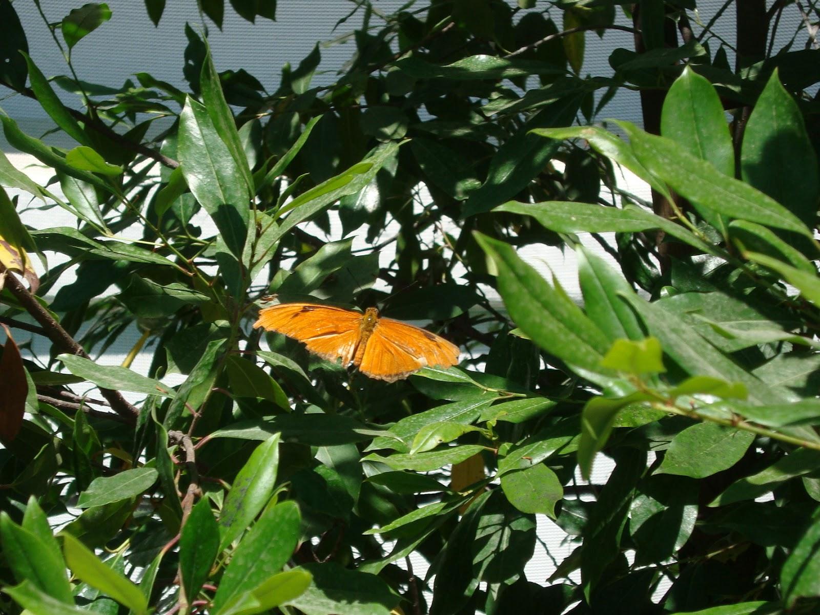 highway runner butterfly garden santa barbara ca