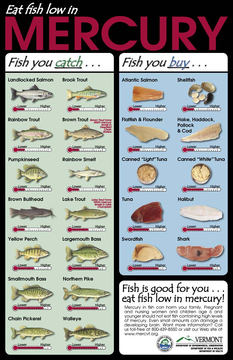 the fisheries blog mercury in fish what should i eat