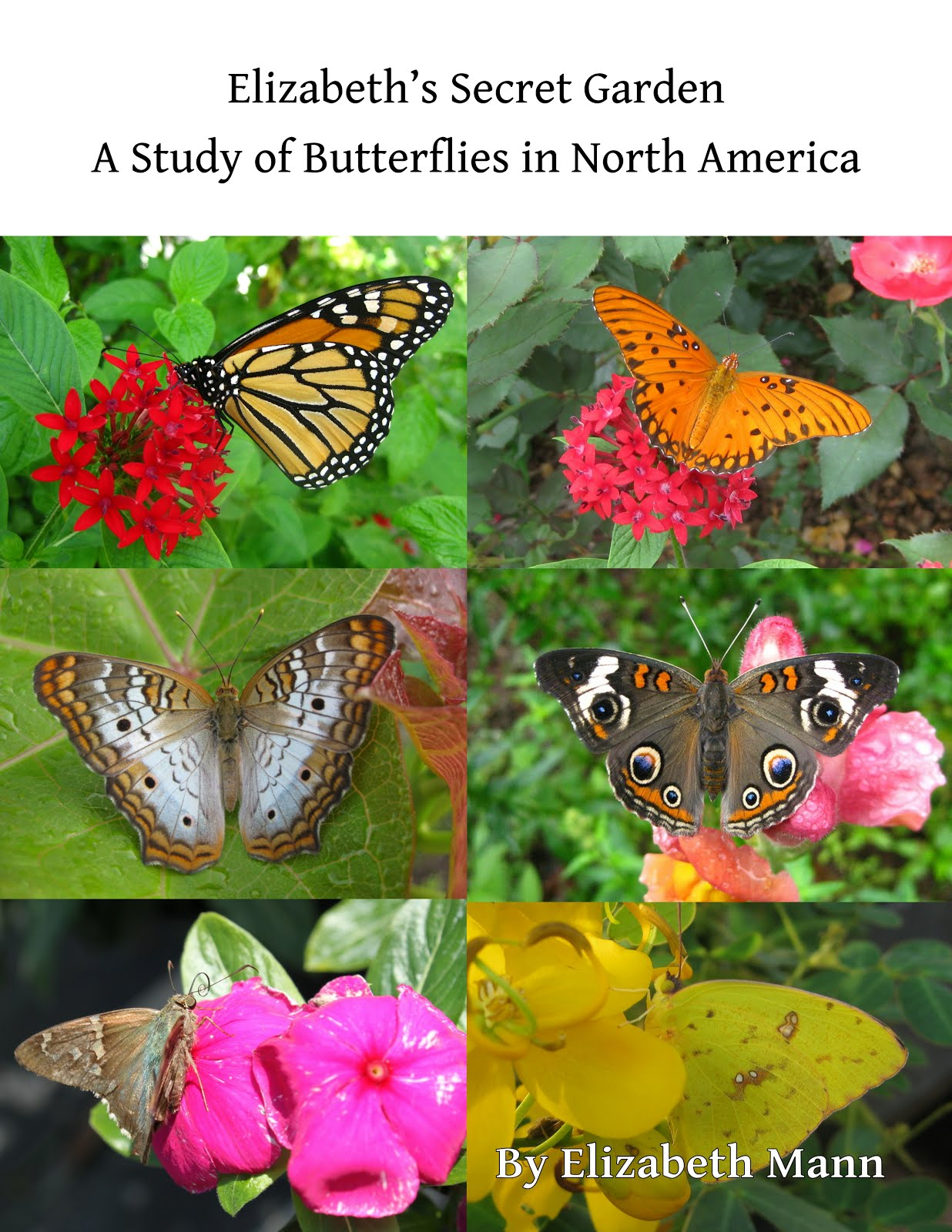 Click to Buy My Book on Butterflies