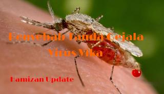 Penyebab Tanda Gejala Virus Vika