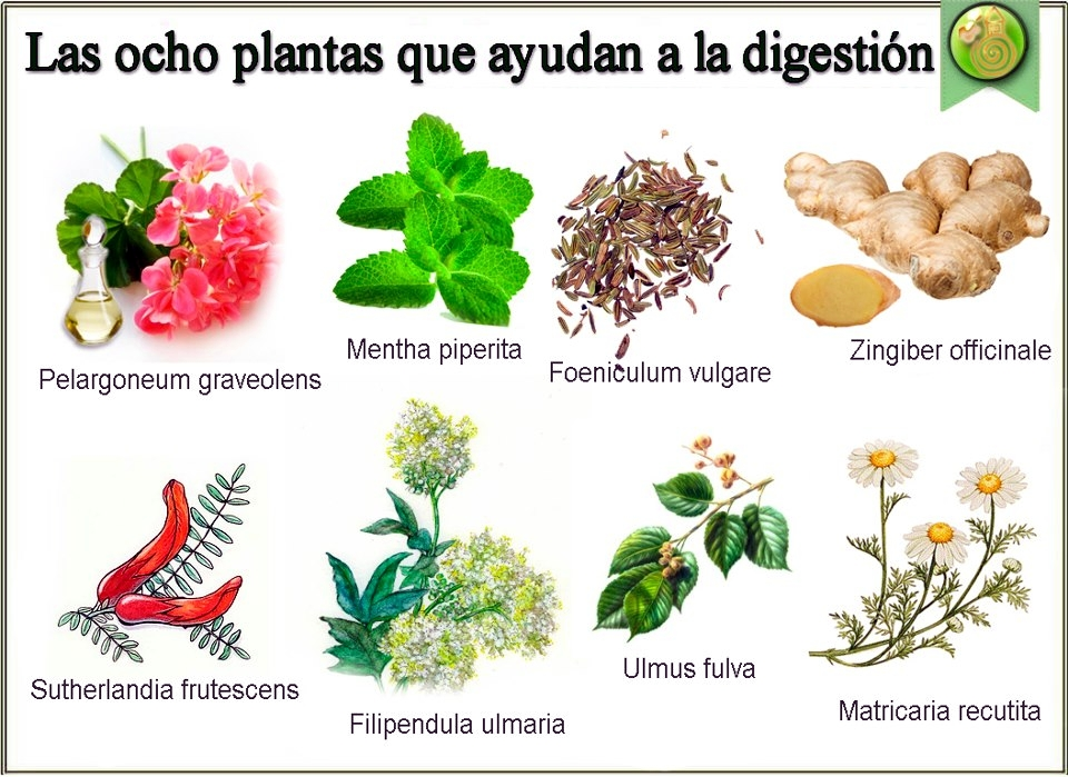 Mauanda el universo 8 plantas para la digesti n - Meteorismo remedios ...