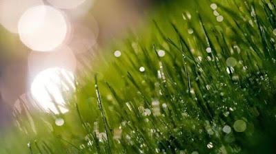 Mbah Kekok - Lagu Yang Enak Didengar Saat Hujan (Versi Korea)