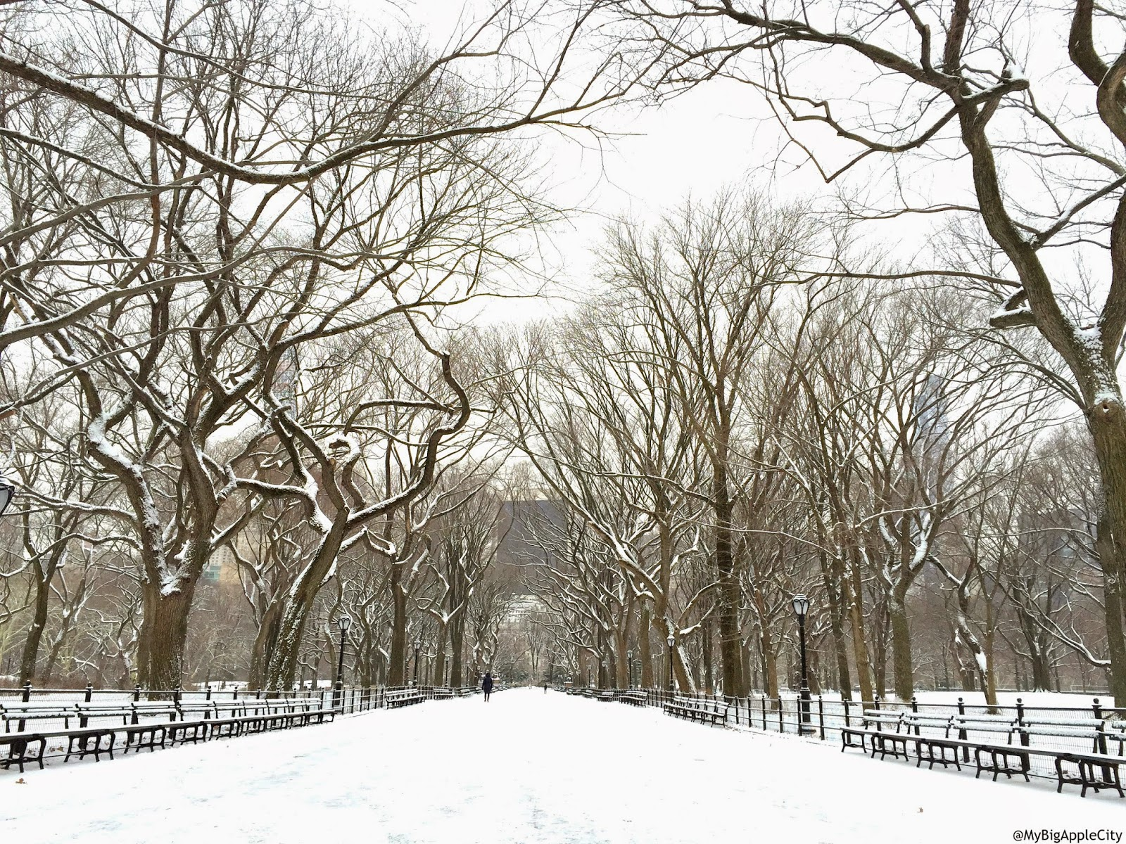 juno-2015-NYC-Blizzard-love-central-park