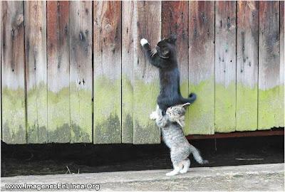 Ayudando a un amigo gato
