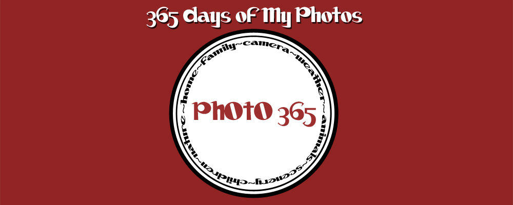365 Days of My Photos