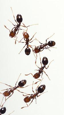 gambar semut kartun - gambar semut - gambar semut kartun