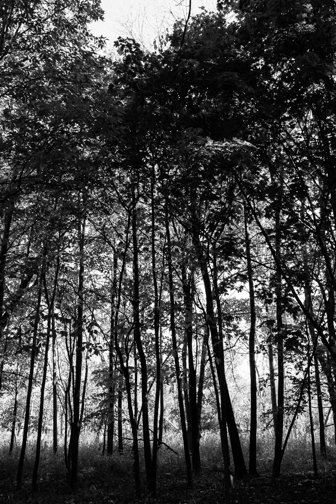North Park Village Nature Center, trees B&W
