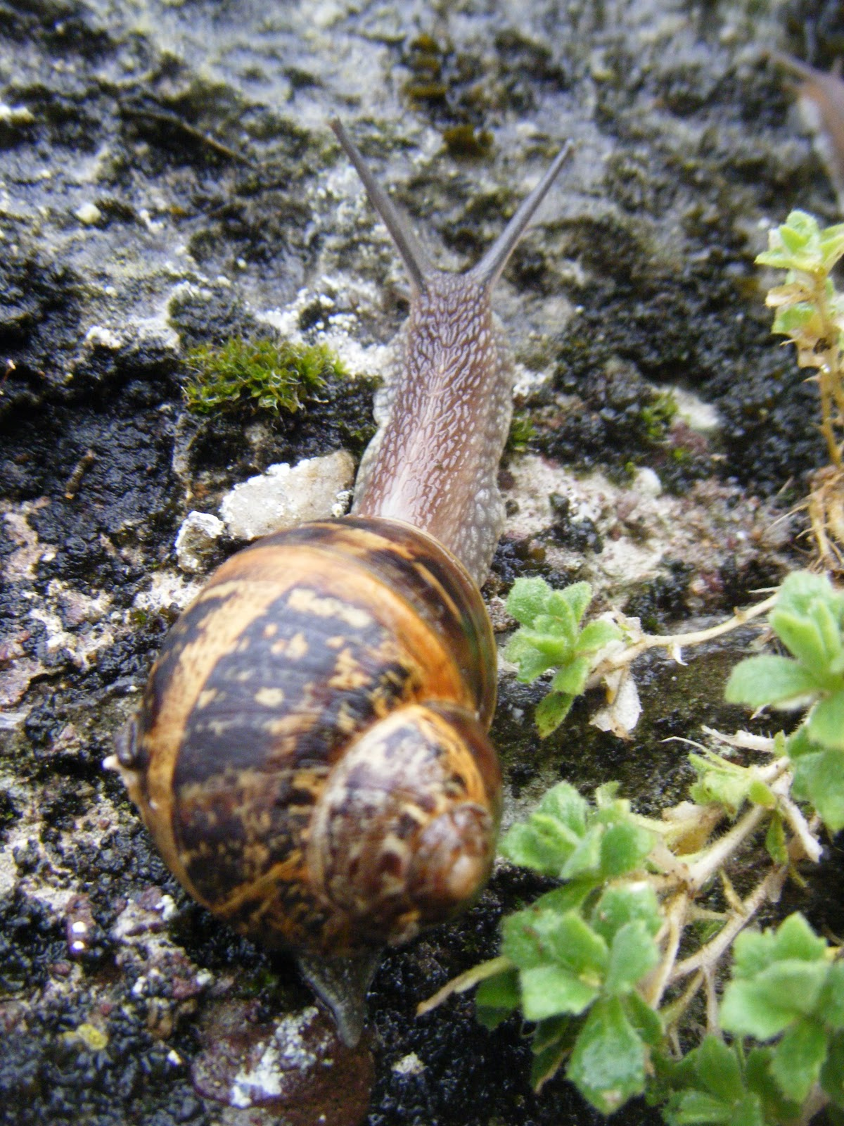 21stcenturynaturalist Snails Are Eating My House