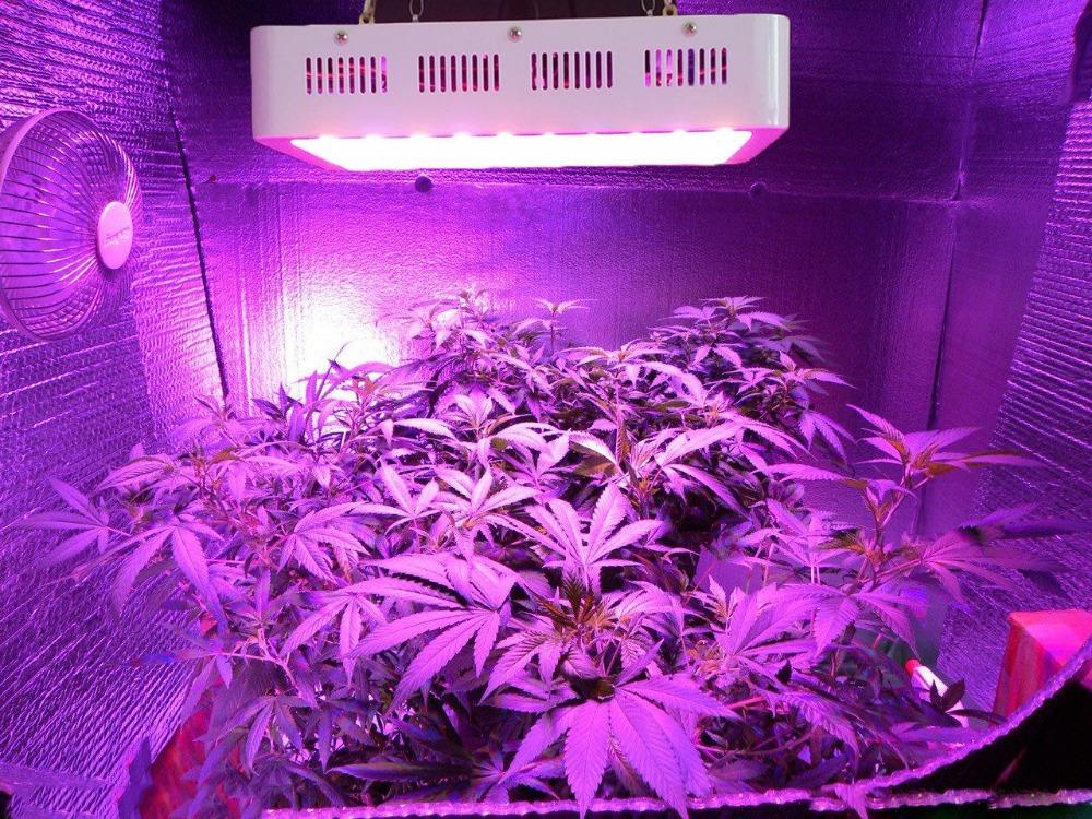 Cannabis indoor quale lampada utilizzare