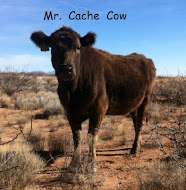 Mr. Cache Cow