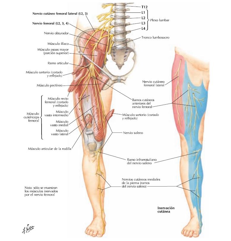 Anatomia Blog: enero 2016