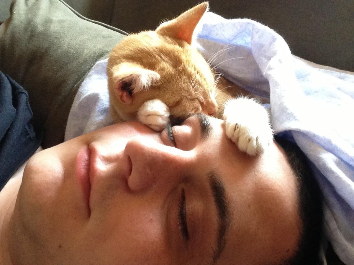 Фото котов: милый котик