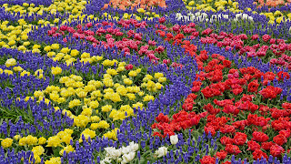 nice wallpapers Desktop Flower Patterns Gardens Netherlands background ajd 1920x1080.jpg