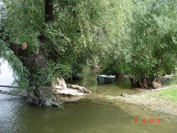 Delta Dunarii Wels