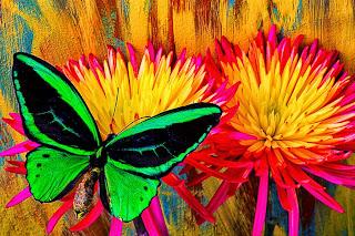 bodegones-con-flores-y-mariposas