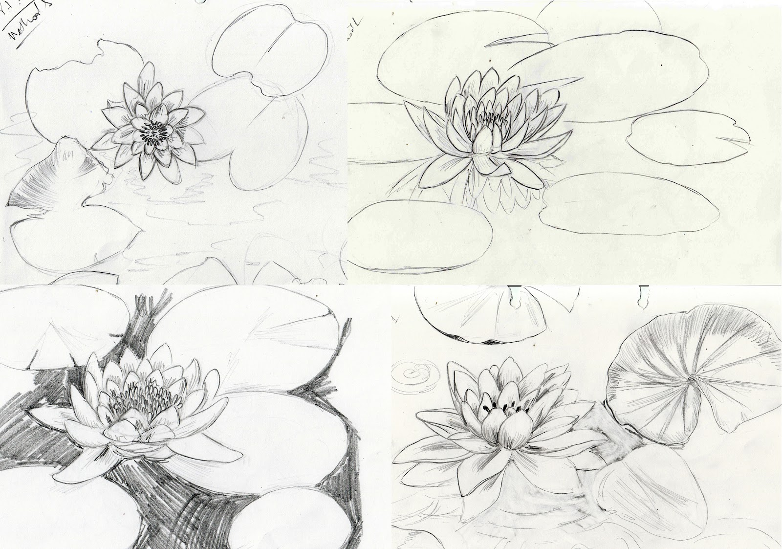 are other four sketches  Drawings Of Water Lilies