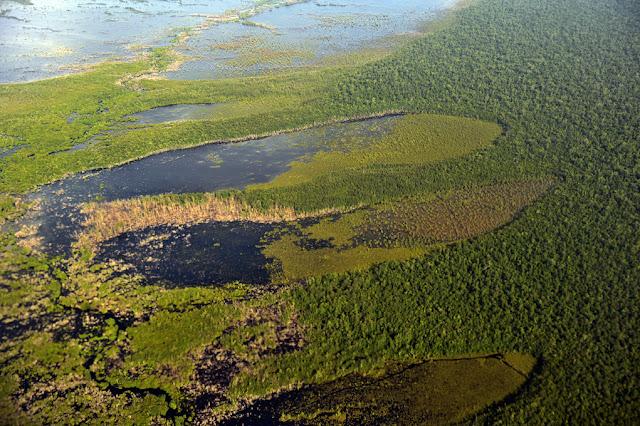 Potret Kerusakan Hutan Sebangau
