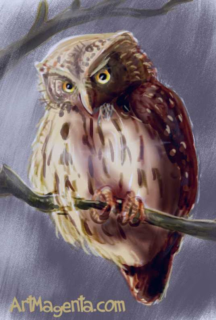 Pygmy Owl sketch painting. Bird art drawing by illustrator Artmagenta