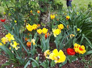 O xardín do cole agora...