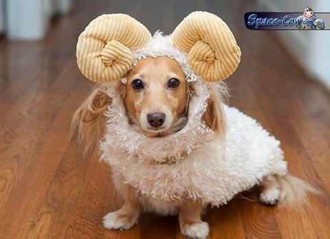 funny cute dog costume