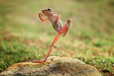 dongvat hai huoc, anh dong vat hai huoc, anh ech xanh hai huoc, anh than lan gecko, anh dong vat vui nhon, ech xanh vui nhon, ech xanh hai huoc
