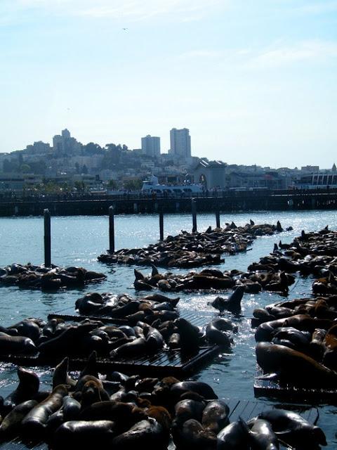 Focas en el Pier 39. San Francisco