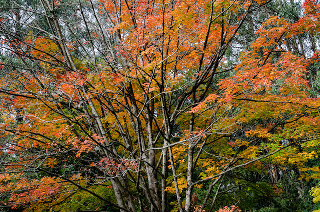 red, yellow and green leaves on tree