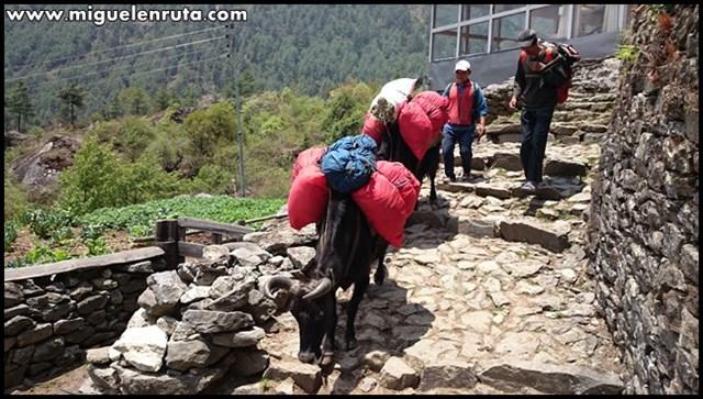 Trek-Campo-Base-Everest-Lukla-Phakding_13