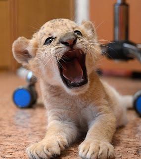 meowr
