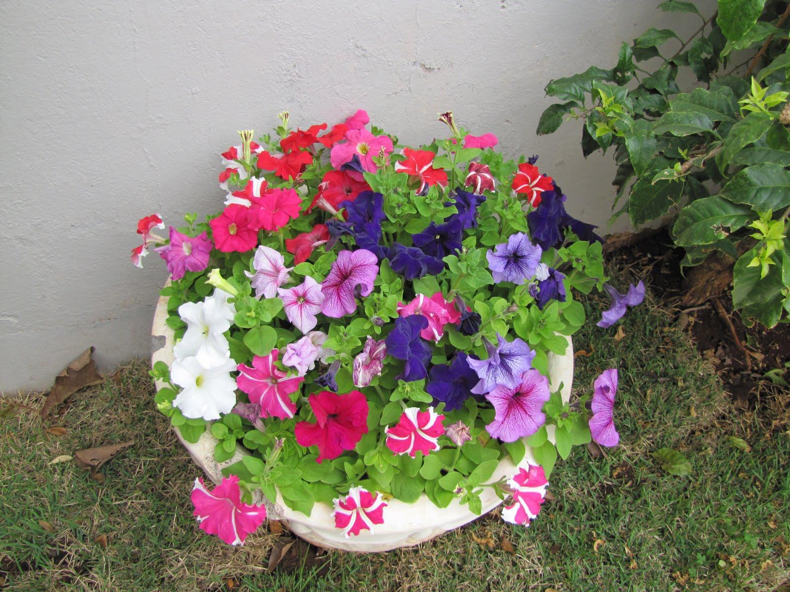 Flores , Herbáceas , Plantas de sol