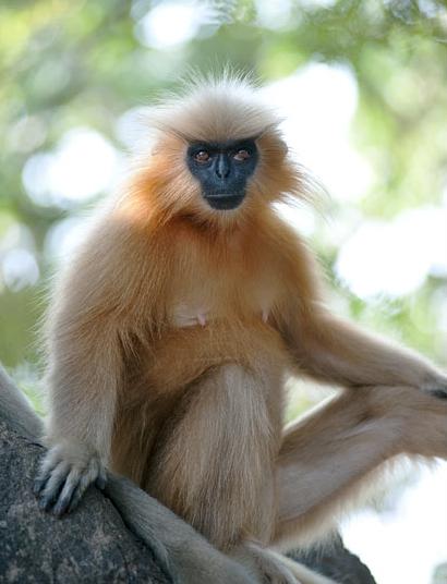 Evolving Monkeys: Indi...