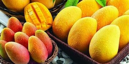 manfaat buah mangga bagi kesehatan,buah mangga untuk wajah,buah mangga muda,buah mangga muda untuk ibu hamil,buah mangga untuk bayi,buah mangga untuk diet,