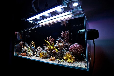 How To Mix And Match Reef Aquarium Light Bulbs To Achieve