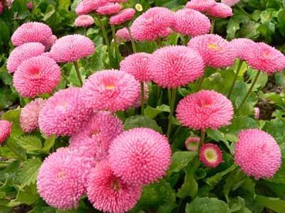 My Garden Makna Bunga Pada Bulan Lahir