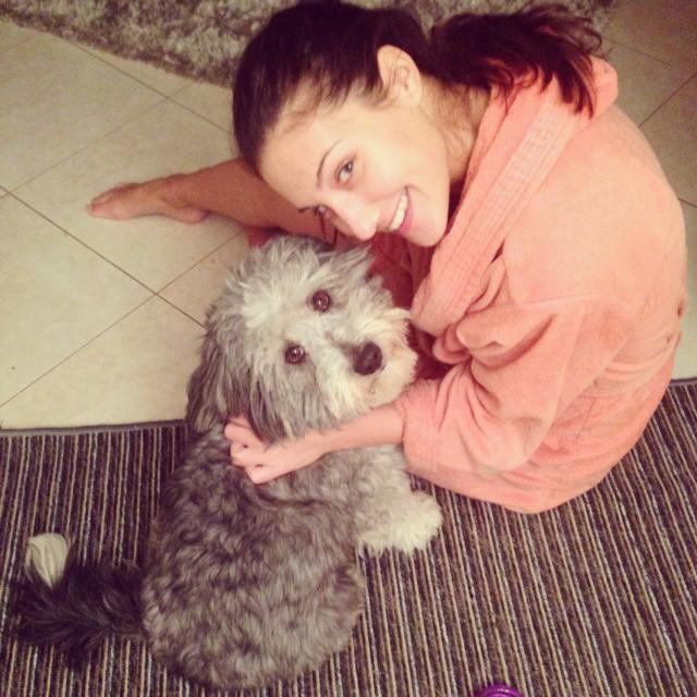 Instagram @lelazivanovic. Lucky havanese puppy. #instapets