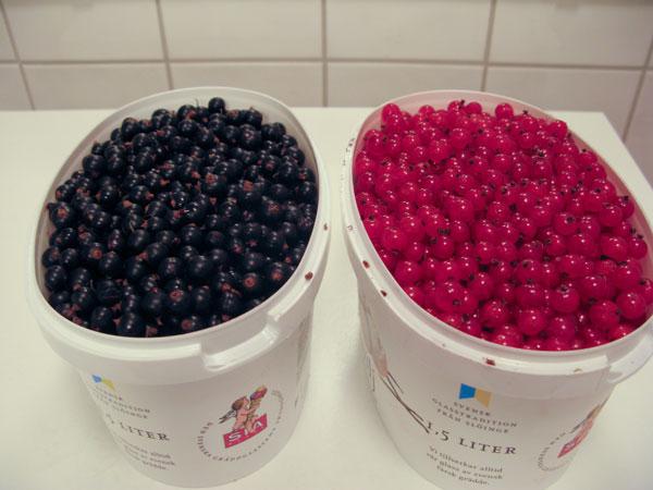 varta vinbär, röda vinbär, red currants, black currants