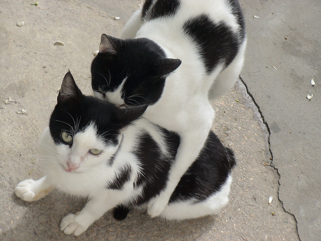 http://4.bp.blogspot.com/-UaNNdlaa1ns/UCnD_sjq6fI/AAAAAAAAAHE/sIxOrU64q04/s1600/lazy-cute-cat-pictures-913.jpg