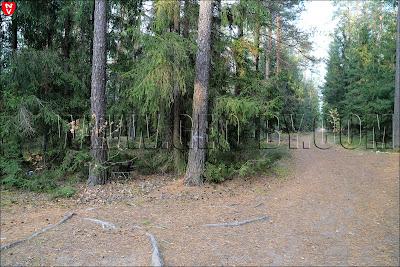 Знаки в лесу под Раковым