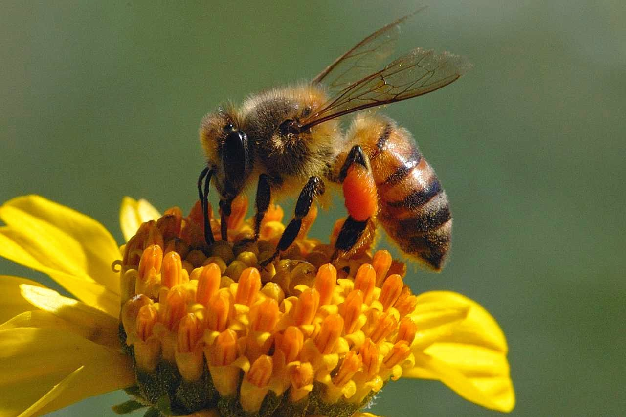 bumble bee pictures
