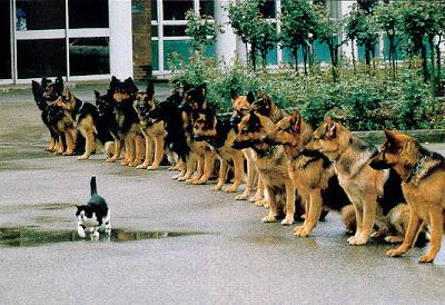 [Picture] เจองี้ตายแน่ๆ รวมเรื่องแปลก Funny_dogs