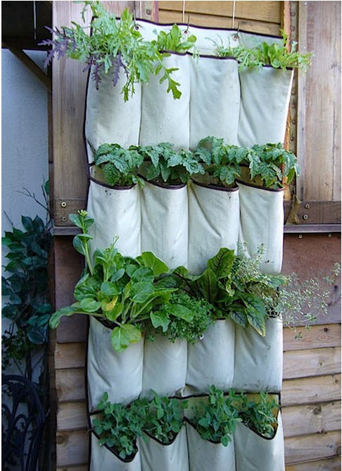 i. Garden: diy idea: repurposed shoe organizer
