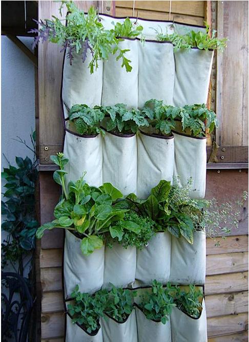 i. Garden: diy idea: repurposed shoe organizer