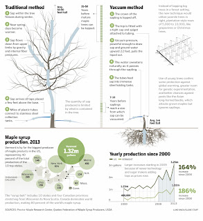 http://www.bostonglobe.com/lifestyle/health-wellness/2014/03/02/traditional-harvesting-maple-sugar-from-forests-may-give-way-tree-farms/hrgPfMmb9ahtjM17FEeqqK/igraphic.html